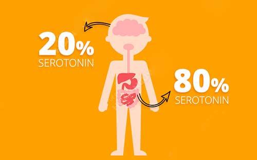 Serotonin tác dụng