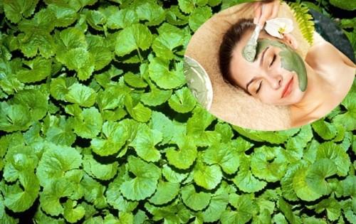 Trị nám da mặt bằng thuốc nam – cây rau má